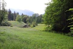 Het fascineren, groot-formaattypes van groene weiden, randen en het Alpiene hout de uitlopers in zomer royalty-vrije stock foto