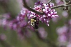 Het Feest van de lente Stock Foto's
