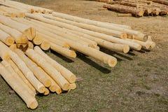 Het Felling van het bos, boomboomstammen stock afbeeldingen