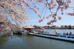 Het Festival van de Bloesem van de kers in Washington DC, de V.S. Royalty-vrije Stock Afbeelding