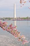 Het Festival van de Bloesem van de kers in Washington, gelijkstroom Stock Afbeelding