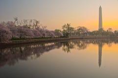 Het Festival van de Bloesem van de kers in Washington, gelijkstroom Royalty-vrije Stock Fotografie