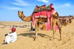 Het Festival van de kameel in Bikaner, India stock foto's