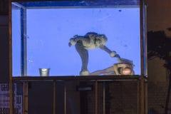 Het festival van het straattheater in Krakau Royalty-vrije Stock Foto