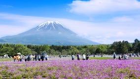 Het Festival van Japan Shibazakura met het gebied van roze mos van Sakura Stock Fotografie