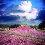 Het Festival van Japan Shibazakura met het gebied van roze mos van Sakura Royalty-vrije Stock Afbeelding