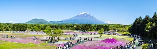 Het Festival van Japan Shibazakura met het gebied van roze mos van Sakura Stock Afbeeldingen