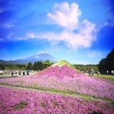 Het Festival van Japan Shibazakura met het gebied van roze mos van Sakura Stock Foto's