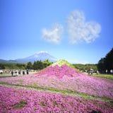 Het Festival van Japan Shibazakura met het gebied van roze mos van Sakura Royalty-vrije Stock Foto's