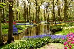 Het festival van tulpen Stock Foto's