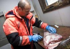 Het fileren van de visser kabeljauw Stock Foto's