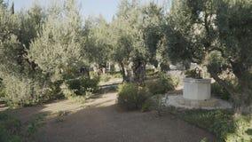 Het filteren van schot van de tuin van gethsemane in Jeruzalem stock videobeelden