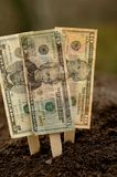 Het financiële Planten Royalty-vrije Stock Fotografie