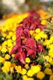 Het flard van de bloem Royalty-vrije Stock Foto's