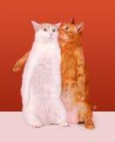 Het fluisteren Katten Royalty-vrije Stock Afbeelding