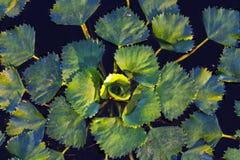 Het fluoride van waspoeder bevordert overwoekerende meren royalty-vrije stock afbeeldingen