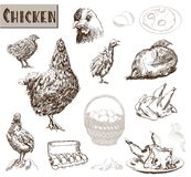 Het fokken van de kip Stock Foto's
