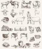Het fokken van schapen Stock Foto's