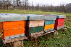 Het fokkenbijen: bijenkorven stock afbeelding