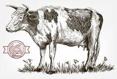 Het fokkenkoe reeks vectorelementen vee Stock Foto's