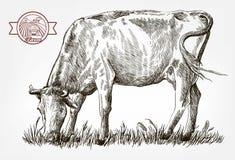 Het fokkenkoe reeks vectorelementen vee Stock Afbeeldingen