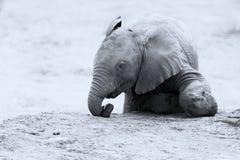 Het fokkenkudde van olifants drinkwater bij een kleine vijver stock fotografie