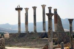 Het Forum van Volubilis 2 Royalty-vrije Stock Foto's