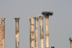 Het Forum van Volubilis 3 Stock Fotografie
