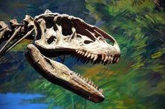 Het fossiel van de dinosaurus Royalty-vrije Stock Afbeelding