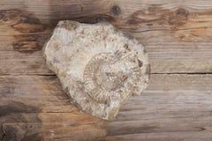 Het fossiel van Nautilus in steen Royalty-vrije Stock Afbeeldingen