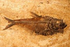 Het fossiel van vissen