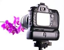 Het fotograferen van orchidee in fotostudio stock foto's