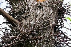 Het fragment van de de boomstam van de doorn stock afbeelding