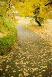 Het fragment van de herfst Stock Foto