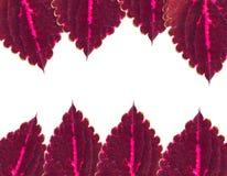 Het frame van bladeren Royalty-vrije Stock Afbeelding