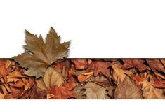 Het frame van bladeren Stock Foto's
