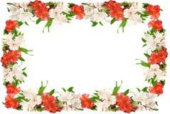 Het frame van bloemen. Royalty-vrije Stock Afbeeldingen