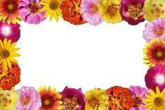 Het frame van bloemen Stock Afbeeldingen