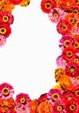 Het frame van bloemen royalty-vrije stock foto's
