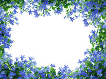 Het frame van bloemen stock fotografie