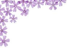 Het frame van bloemen Royalty-vrije Stock Afbeeldingen