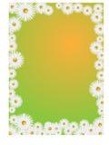 Het frame van Daisy Stock Afbeeldingen