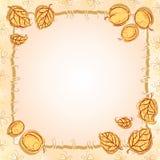 Het frame van de abrikoos Royalty-vrije Stock Afbeelding