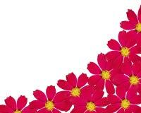 Het frame van de bloem. Stock Afbeelding