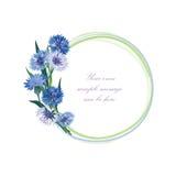 Het frame van de bloem Doorboor bloemengrens Geïsoleerde boeketkorenbloem Stock Afbeeldingen