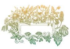 Het frame van de bloem EPS 10 Stock Foto