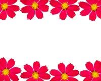 Het frame van de bloem met ruimte voor de tekst. Stock Foto