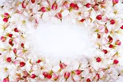 Het frame van de bloesembloemblaadjes van de kers Stock Foto