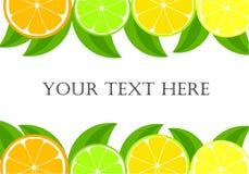 Het frame van de citrusvrucht Royalty-vrije Stock Foto