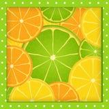Het frame van de citrusvrucht Stock Foto